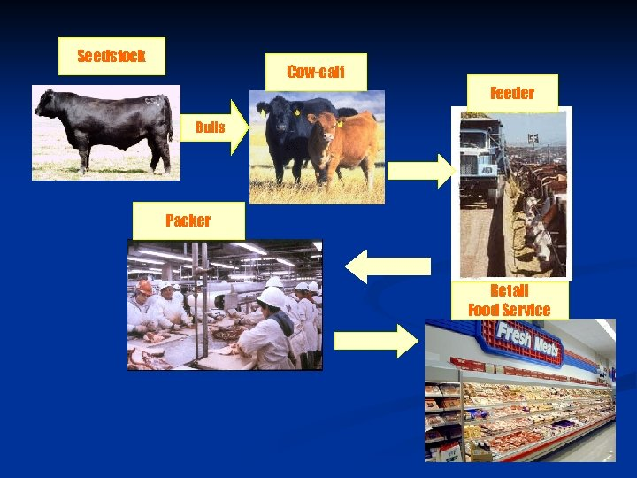 Seedstock Cow-calf Feeder Bulls Packer Retail Food Service