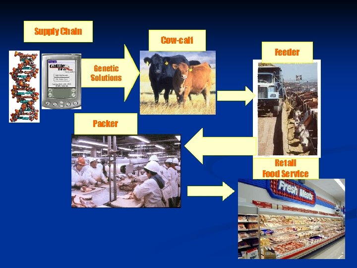 Supply Chain Cow-calf Feeder Genetic Solutions Packer Retail Food Service