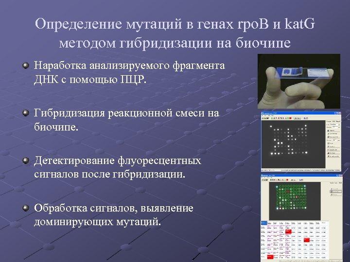 Определение мутаций в генах rpo. B и kаt. G методом гибридизации на биочипе Наработка