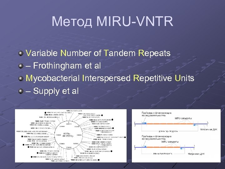 Метод MIRU-VNTR Variable Number of Tandem Repeats – Frothingham et al Mycobacterial Interspersed Repetitive