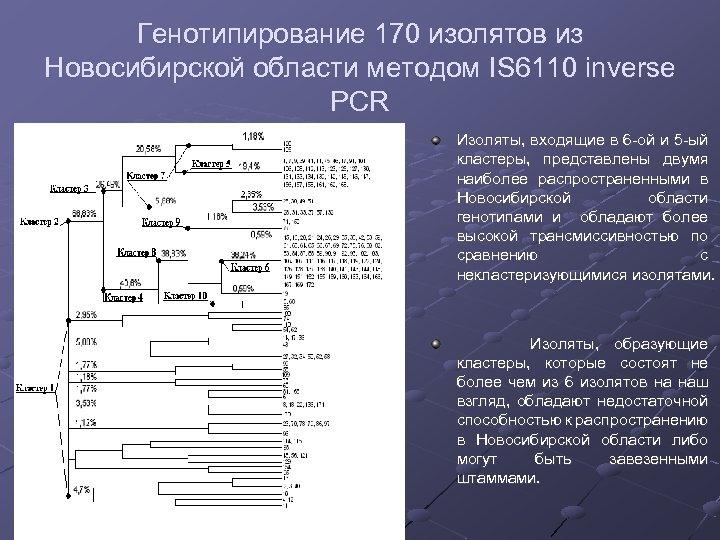 Генотипирование 170 изолятов из Новосибирской области методом IS 6110 inverse PCR Изоляты, входящие в