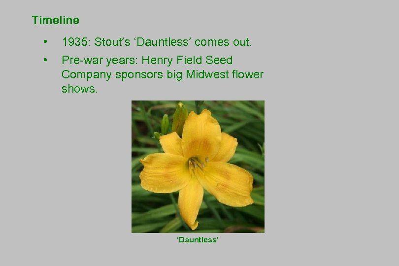 Timeline • 1935: Stout's 'Dauntless' comes out. • Pre-war years: Henry Field Seed Company