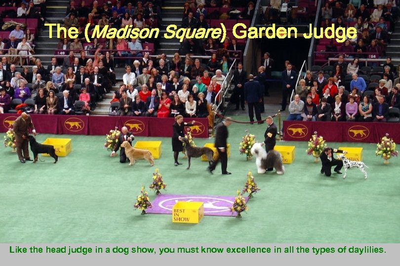 The (Madison Square) Garden Judge Like the head judge in a dog show, you