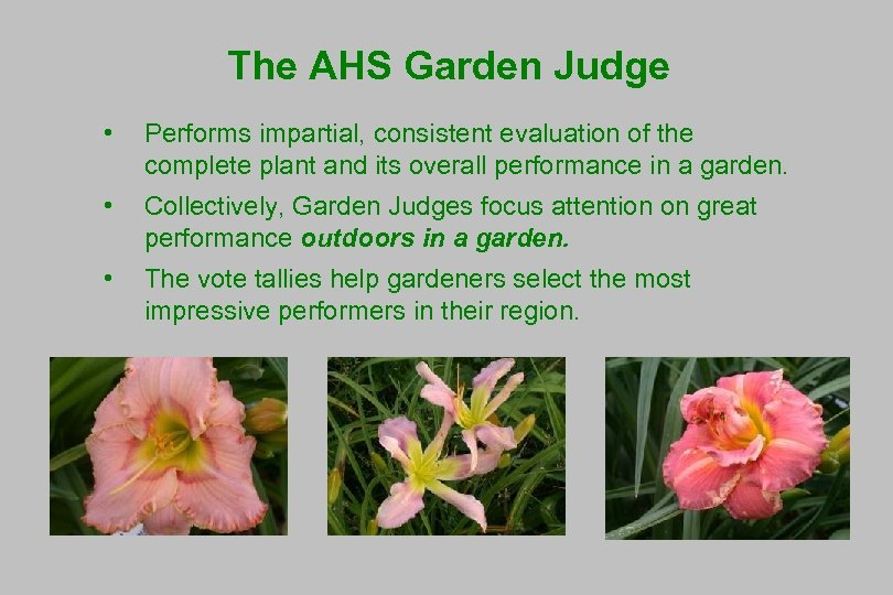 The AHS Garden Judge • Performs impartial, consistent evaluation of the complete plant and