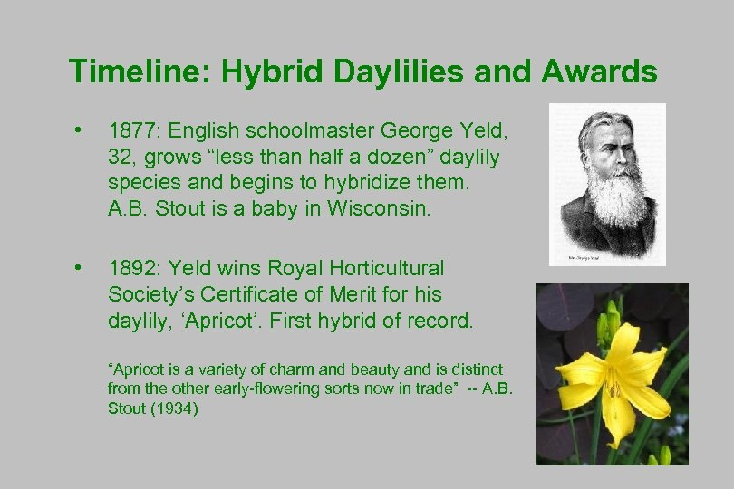 """Timeline: Hybrid Daylilies and Awards • 1877: English schoolmaster George Yeld, 32, grows """"less"""