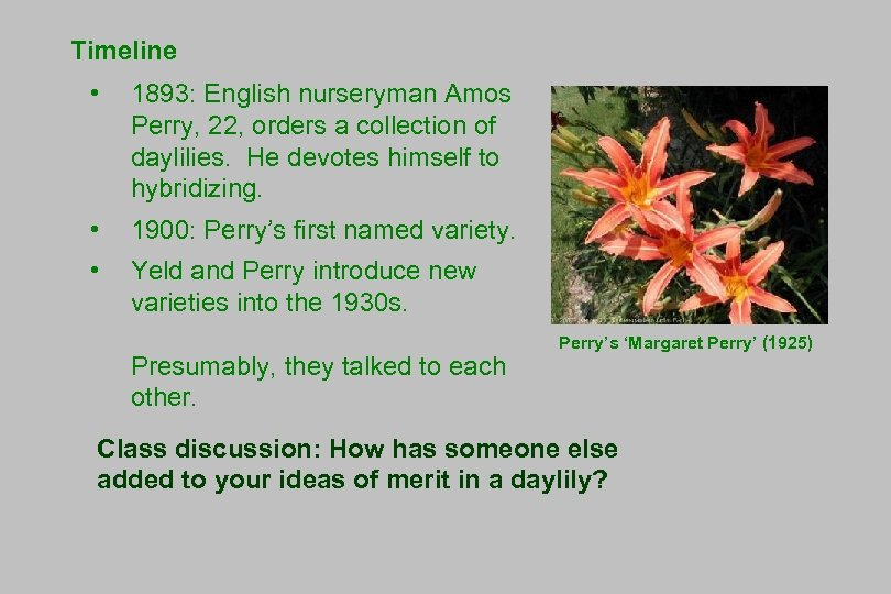 Timeline • 1893: English nurseryman Amos Perry, 22, orders a collection of daylilies. He