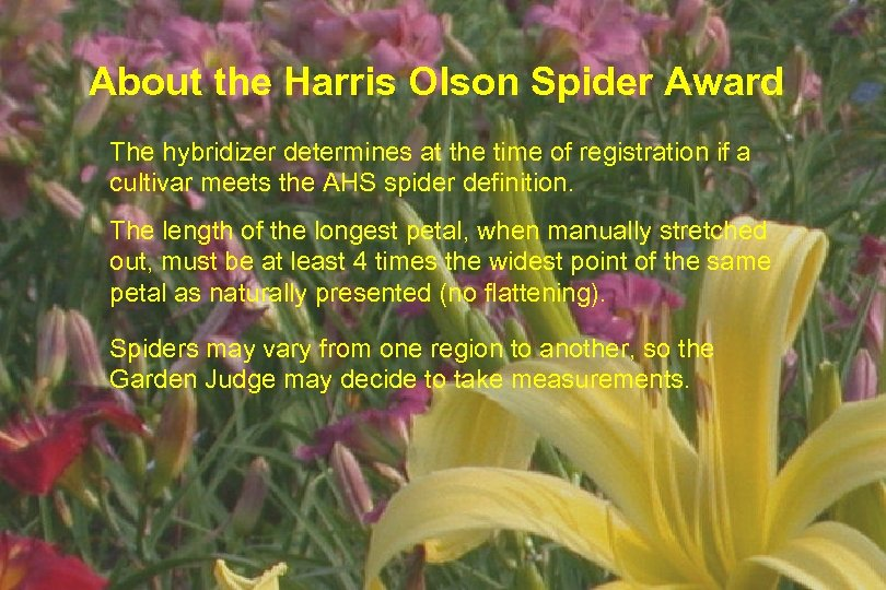About the Harris Olson Spider Award The hybridizer determines at the time of registration