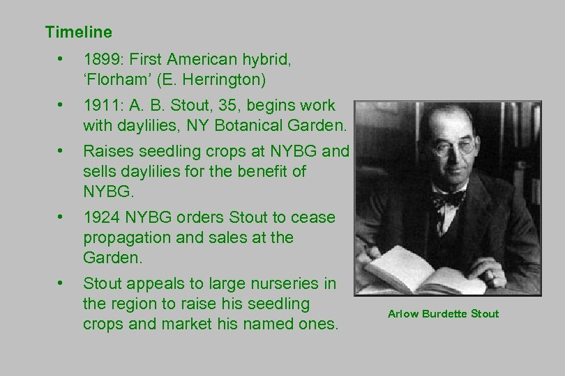 Timeline • 1899: First American hybrid, 'Florham' (E. Herrington) • 1911: A. B. Stout,