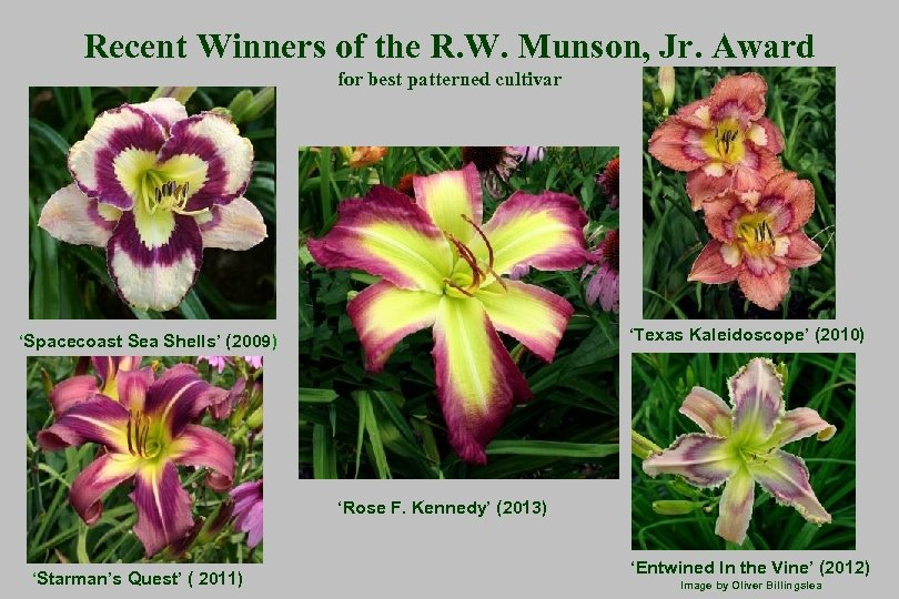 Recent Winners of the R. W. Munson, Jr. Award for best patterned cultivar 'Texas