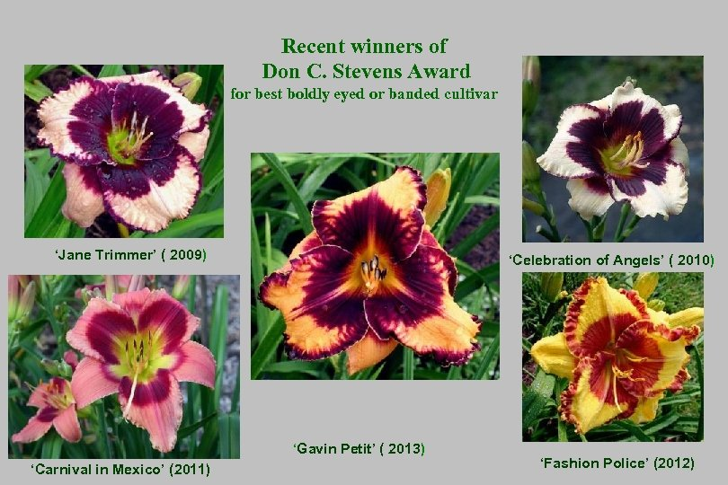 Recent winners of Don C. Stevens Award for best boldly eyed or banded cultivar