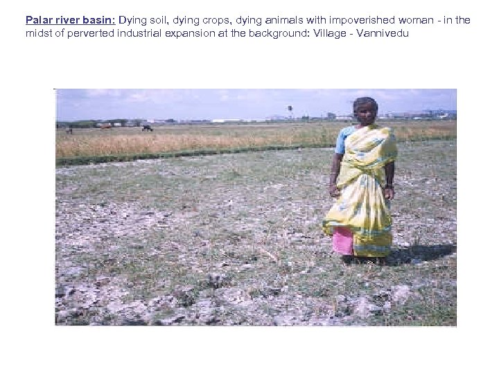 Palar river basin: Dying soil, dying crops, dying animals with impoverished woman - in
