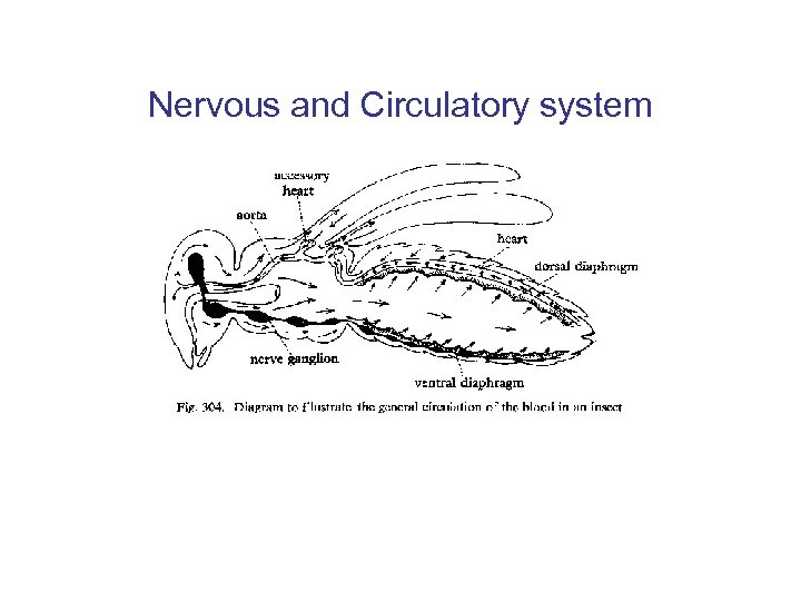 Nervous and Circulatory system