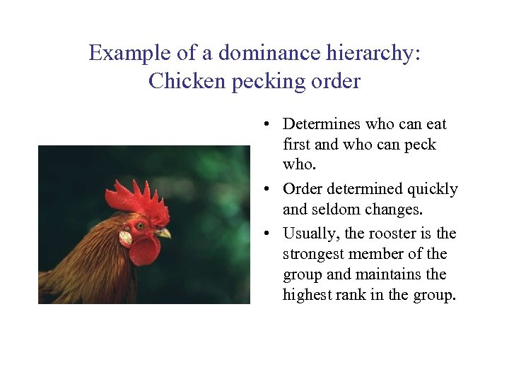 Example of a dominance hierarchy: Chicken pecking order • Determines who can eat first