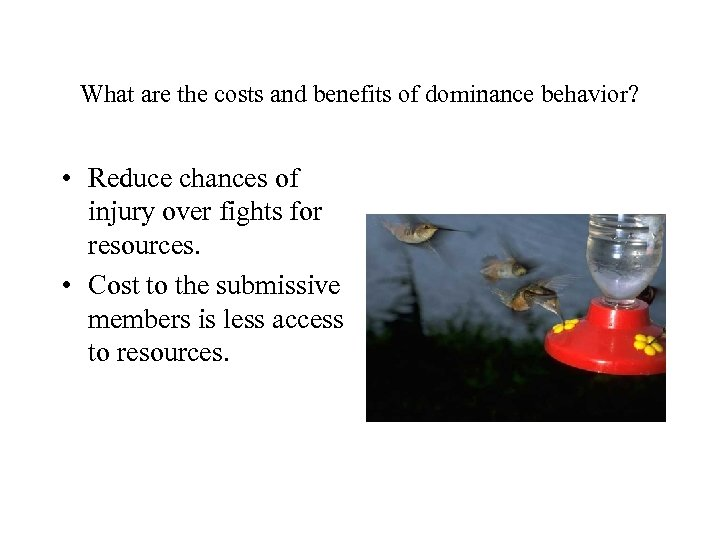 What are the costs and benefits of dominance behavior? • Reduce chances of injury