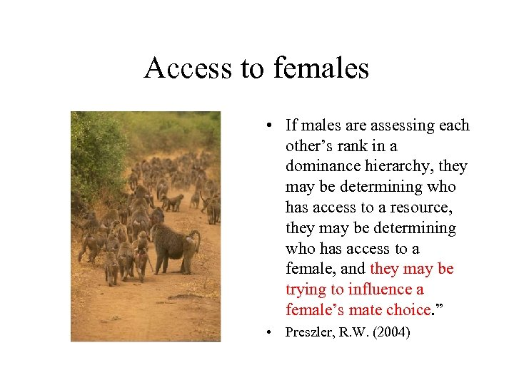 Access to females • If males are assessing each other's rank in a dominance