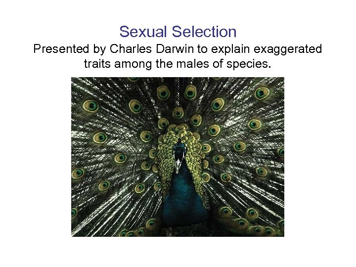 Sexual Selection Presented by Charles Darwin to explain exaggerated traits among the males of
