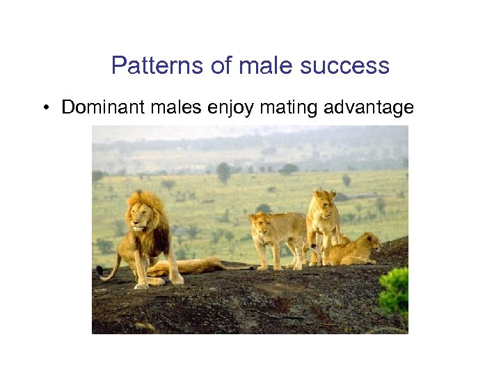 Patterns of male success • Dominant males enjoy mating advantage