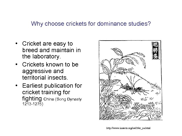 Why choose crickets for dominance studies? • Cricket are easy to breed and maintain