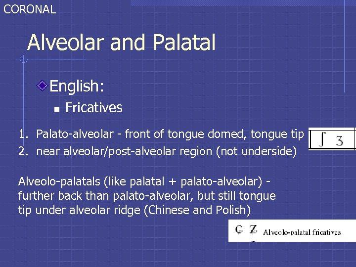 CORONAL Alveolar and Palatal English: n Fricatives 1. Palato-alveolar - front of tongue domed,
