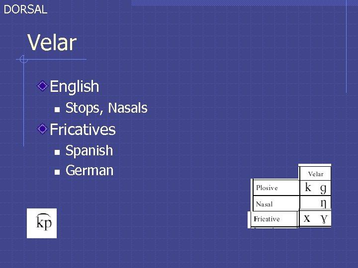 DORSAL Velar English n Stops, Nasals Fricatives n n Spanish German