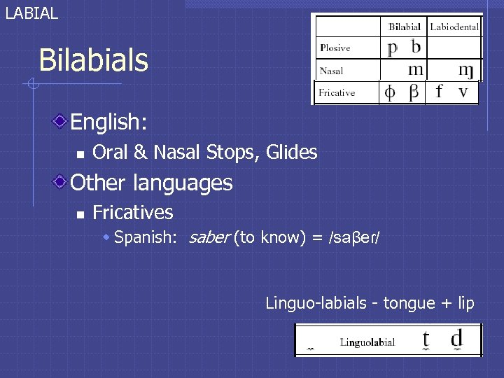 LABIAL Bilabials English: n Oral & Nasal Stops, Glides Other languages n Fricatives w