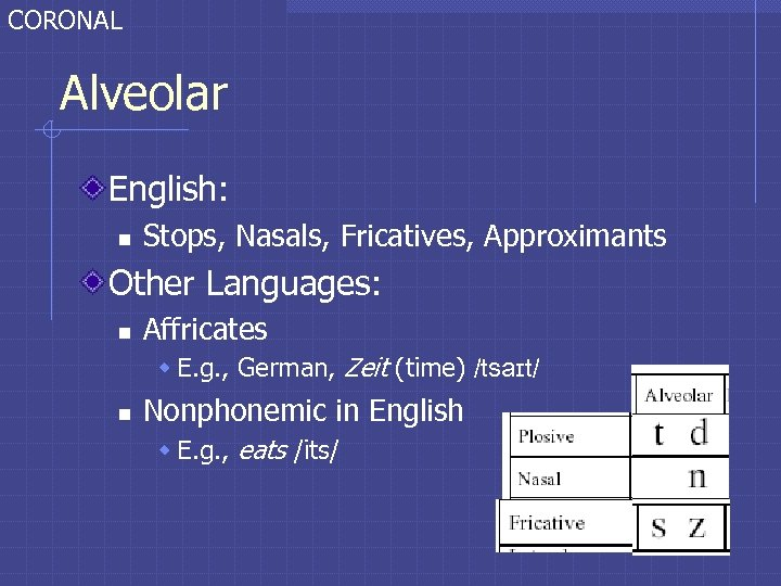 CORONAL Alveolar English: n Stops, Nasals, Fricatives, Approximants Other Languages: n Affricates w E.