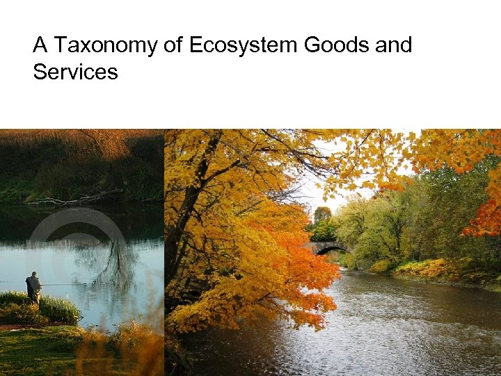A Taxonomy of Ecosystem Goods and Services