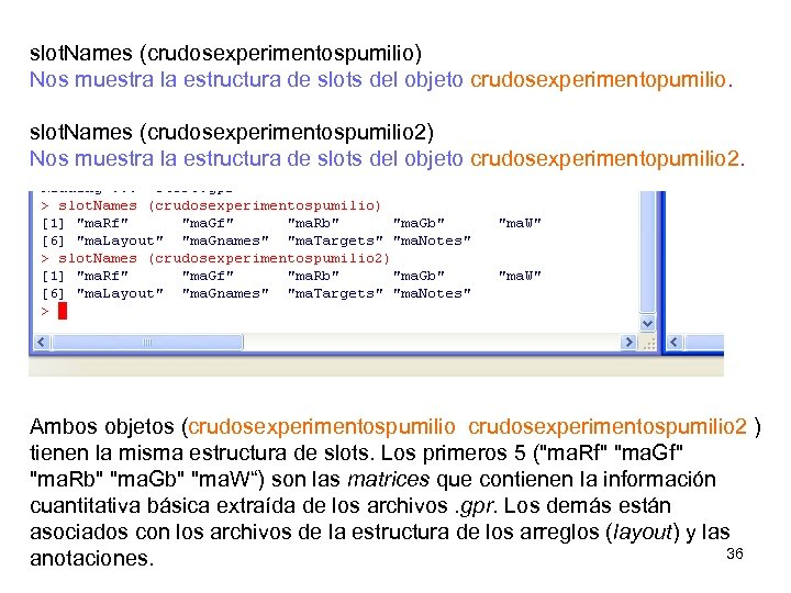 slot. Names (crudosexperimentospumilio) Nos muestra la estructura de slots del objeto crudosexperimentopumilio. slot. Names