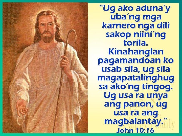 """""""Ug ako aduna'y uba'ng mga karnero nga dili sakop niini'ng torila. Kinahanglan pagamandoan ko"""
