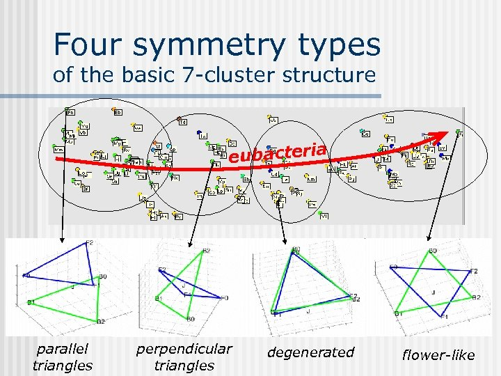 Four symmetry types of the basic 7 -cluster structure eubacteria parallel triangles perpendicular triangles