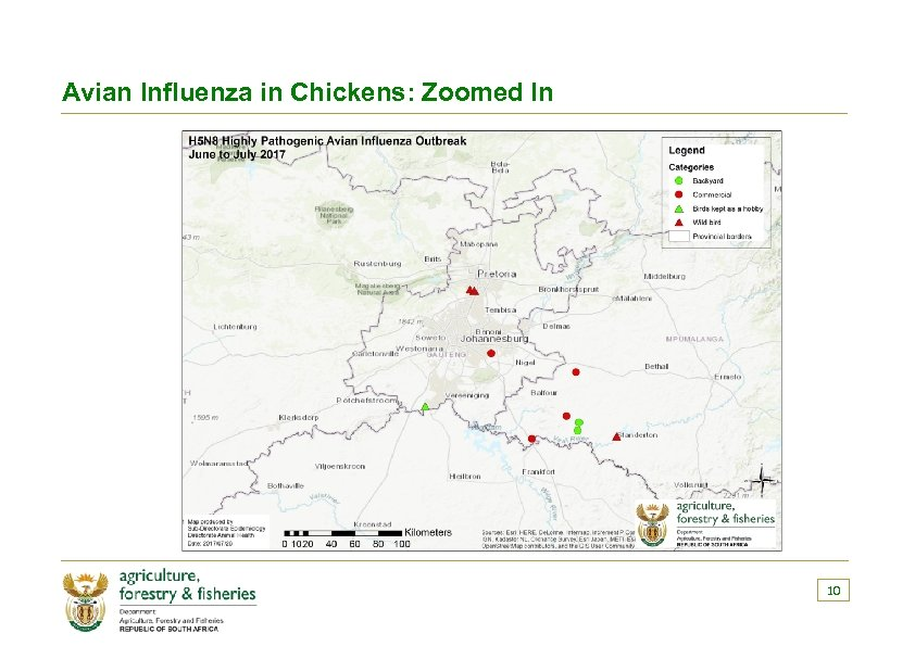 Avian Influenza in Chickens: Zoomed In 10
