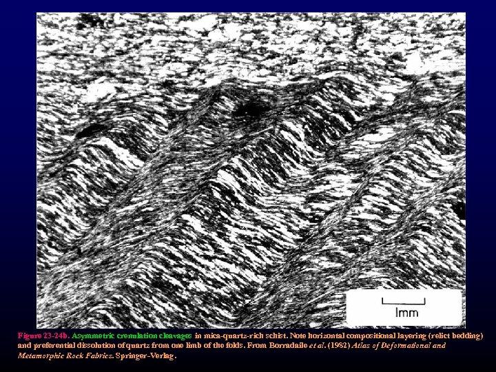 Figure 23 -24 b. Asymmetric crenulation cleavages in mica-quartz-rich schist. Note horizontal compositional layering