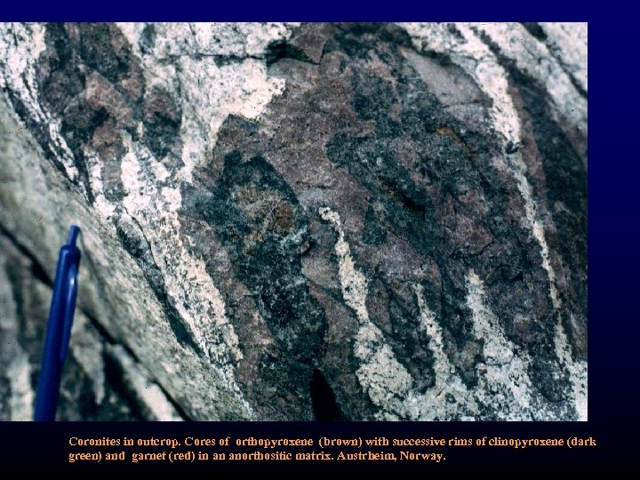Coronites in outcrop. Cores of orthopyroxene (brown) with successive rims of clinopyroxene (dark green)