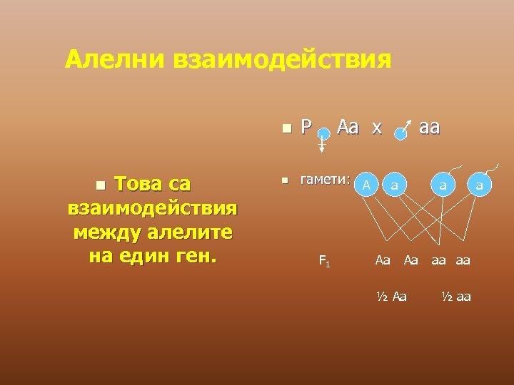 Алелни взаимодействия n Това са взаимодействия между алелите на един ген. n P Аа