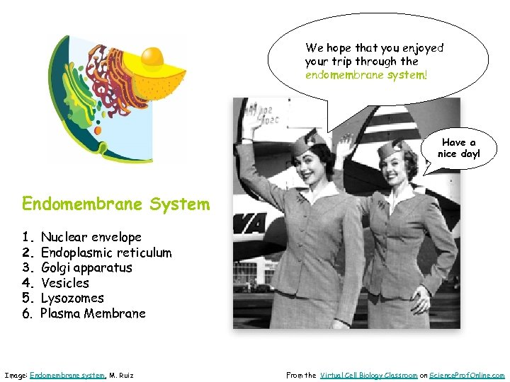 We hope that you enjoyed your trip through the endomembrane system! Have a nice