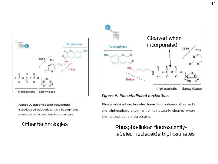 11 Cleaved when incorporated Other technologies Phospho-linked fluorescentlylabeled nucleoside triphosphates