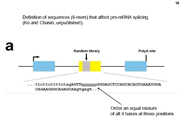 19 Definition of sequences (6 -mers) that affect pre-m. RNA splicing (Ke and Chasin,