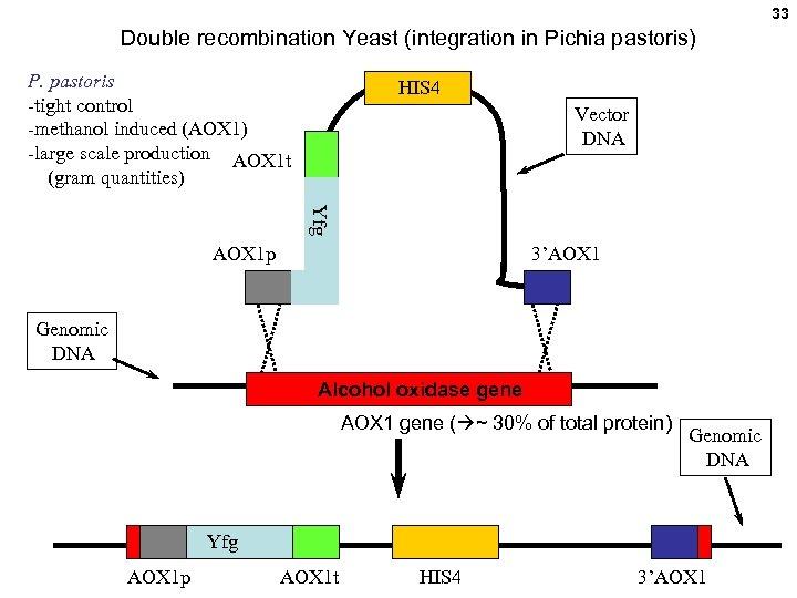 33 Double recombination Yeast (integration in Pichia pastoris) P. pastoris -tight control -methanol induced