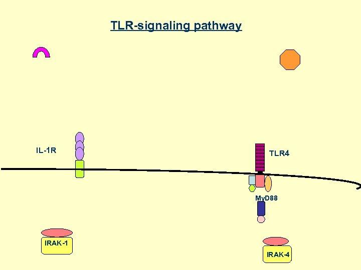 TLR-signaling pathway IL-1 R TLR 4 My. D 88 IRAK-1 IRAK-4