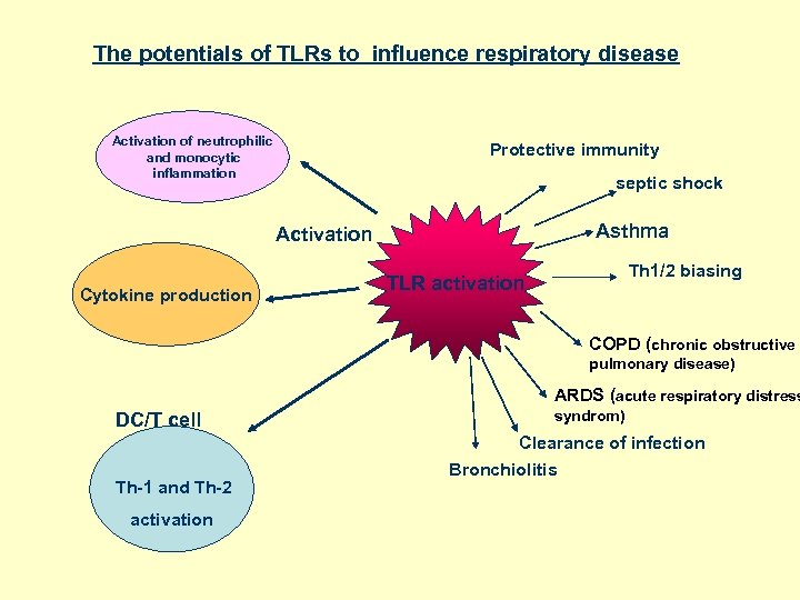 The potentials of TLRs to influence respiratory disease Activation of neutrophilic and monocytic inflammation