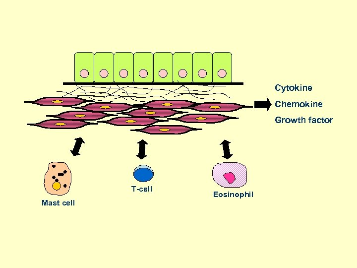 Cytokine Chemokine Growth factor T-cell Mast cell Eosinophil