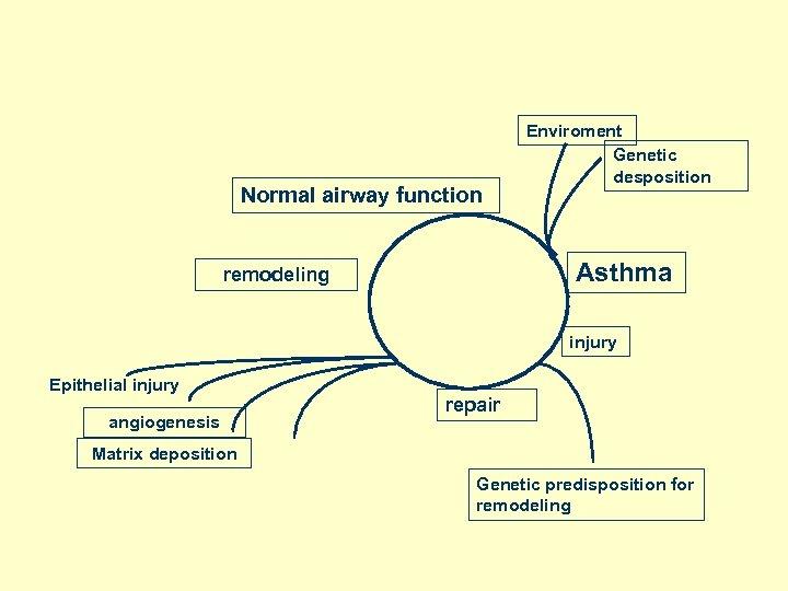 Normal airway function Enviroment Genetic desposition Asthma remodeling injury Epithelial injury angiogenesis repair Matrix