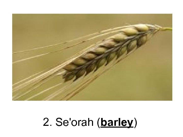 2. Se'orah (barley)