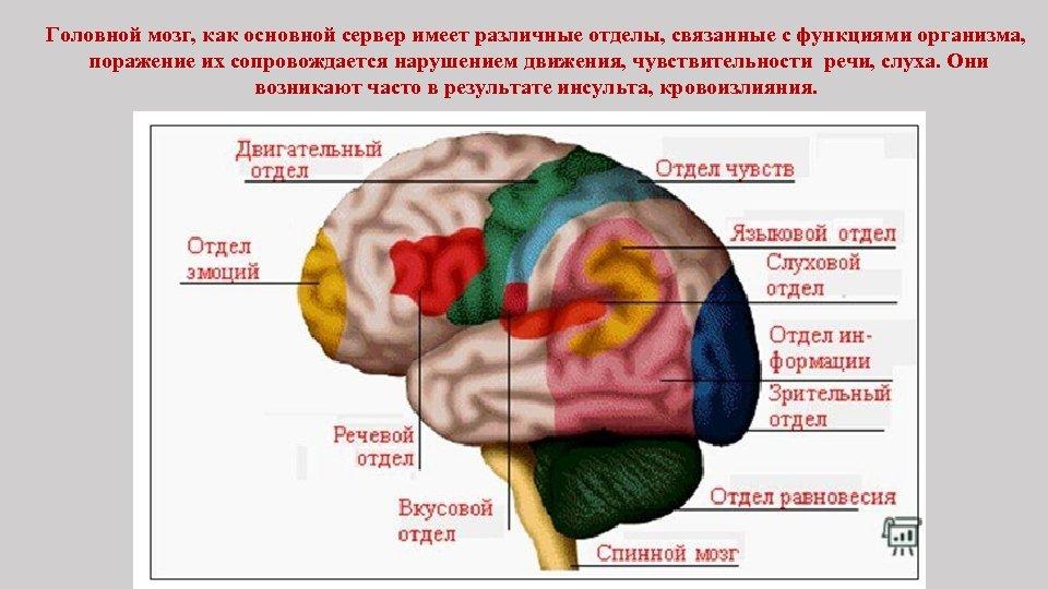 Головной мозг, как основной сервер имеет различные отделы, связанные с функциями организма, поражение их