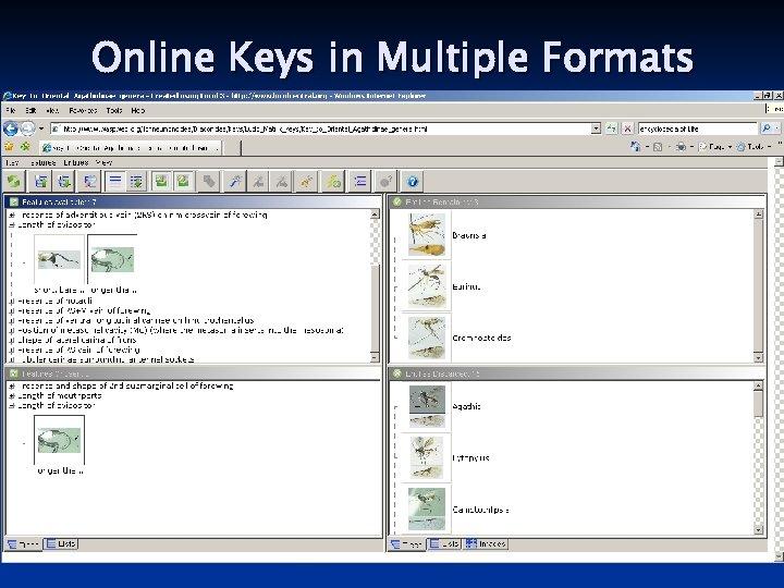 Online Keys in Multiple Formats