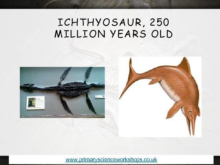 ICHTHYOSAUR, 250 MILLION YEARS OLD www. primaryscienceworkshops. co. uk