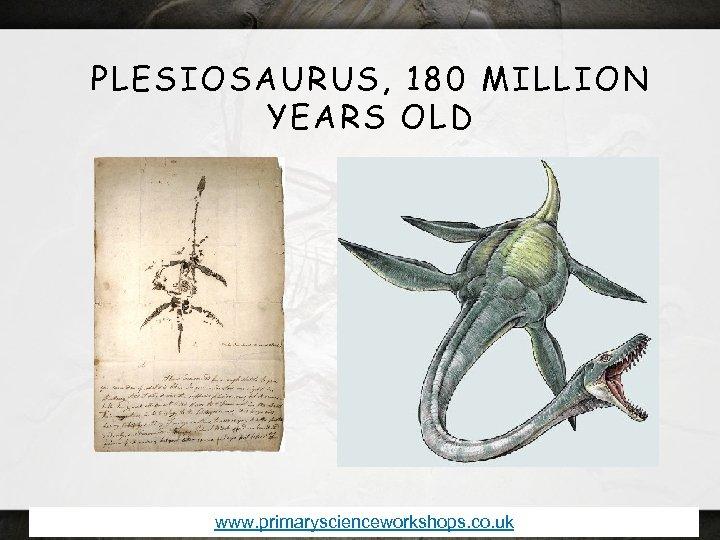 PLESIOSAURUS, 180 MILLION YEARS OLD www. primaryscienceworkshops. co. uk