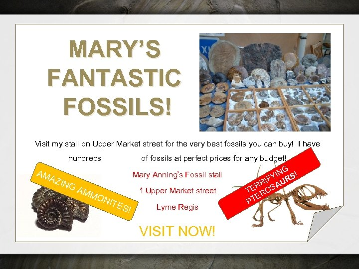 MARY'S FANTASTIC FOSSILS! Visit my stall on Upper Market street for the very best