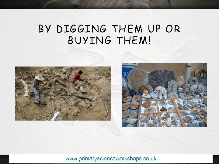 BY DIGGING THEM UP OR BUYING THEM! www. primaryscienceworkshops. co. uk
