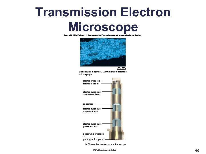 Transmission Electron Microscope Copyright © The Mc. Graw-Hill Companies, Inc. Permission required for reproduction